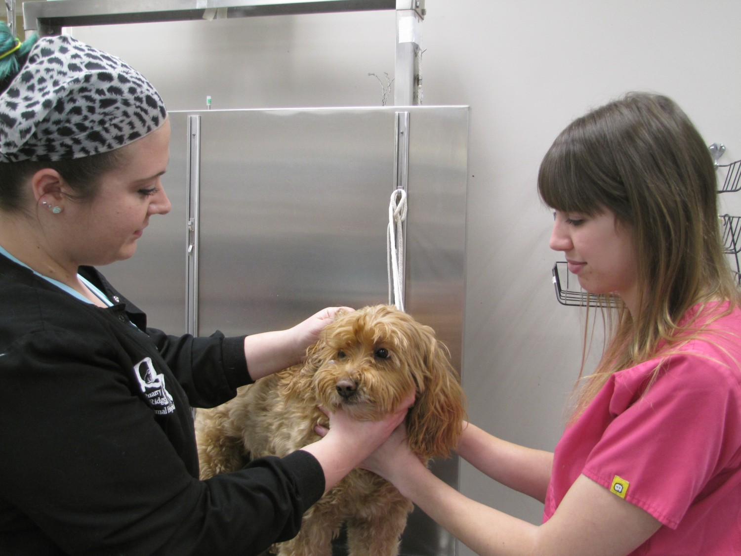 Jessica and Becky examine a dog in our Treatment Room